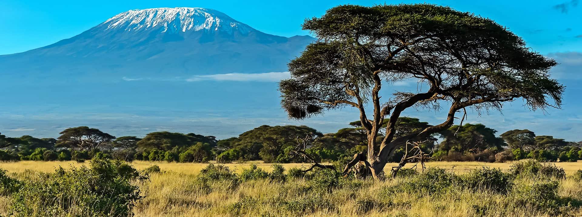 Convitti Africa