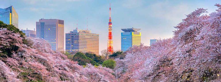 Top 3 International Schools in Tokyo