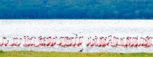 De beste internationale scholen in Nakuru - Kenia - Afrika