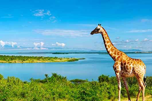 Scuole internazionali Uganda