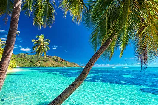 Best International Schools Polynesia