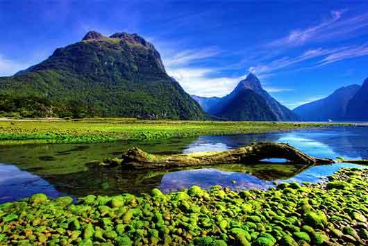 Best Schools New Zealand