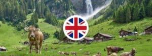Best British Schools in Altdorf